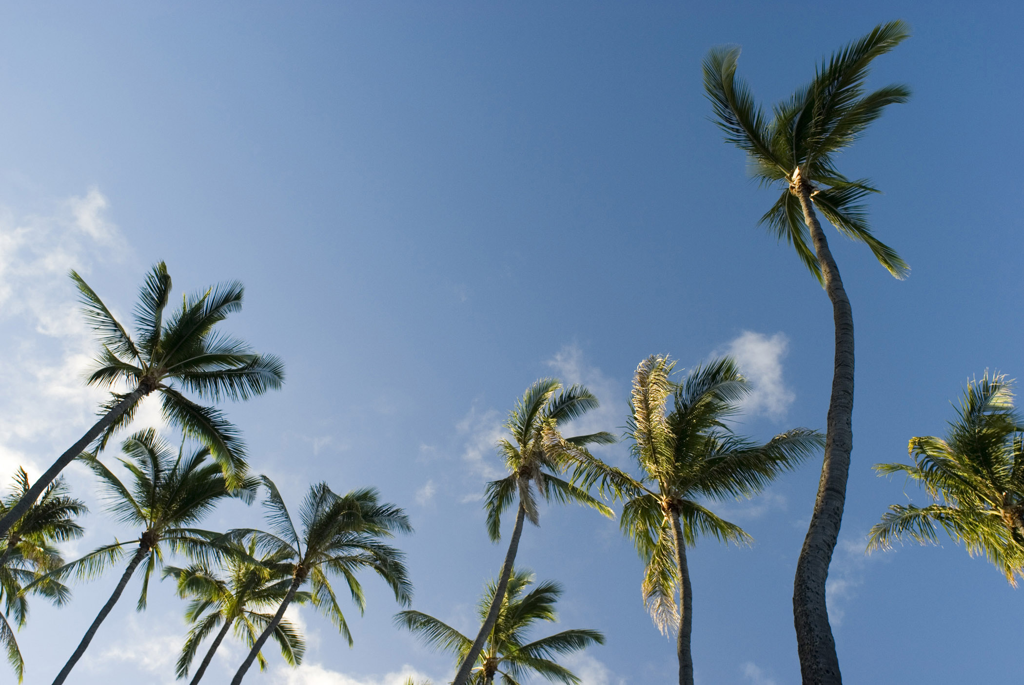Free Fall Themed Desktop Wallpaper Free Stock Photo Of Tall Palm Trees In Worms Eye View