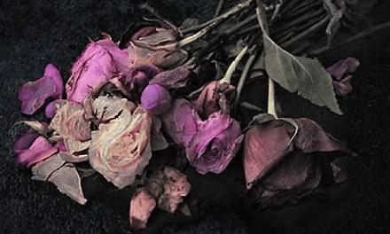 Gerbes de rosae