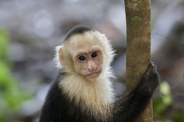 Costa Rica All Inclusive Safari  PhotoFly Travel Club