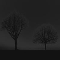 bäume 2 - PHOTOGALERIE WIESBADEN - dunkel-schwarz