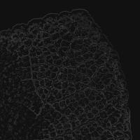 blatt 2- PHOTOGALERIE WIESBADEN - dunkel-schwarz