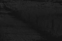 zaun auf wiese - PHOTOGALERIE WIESBADEN - dunkel-schwarz