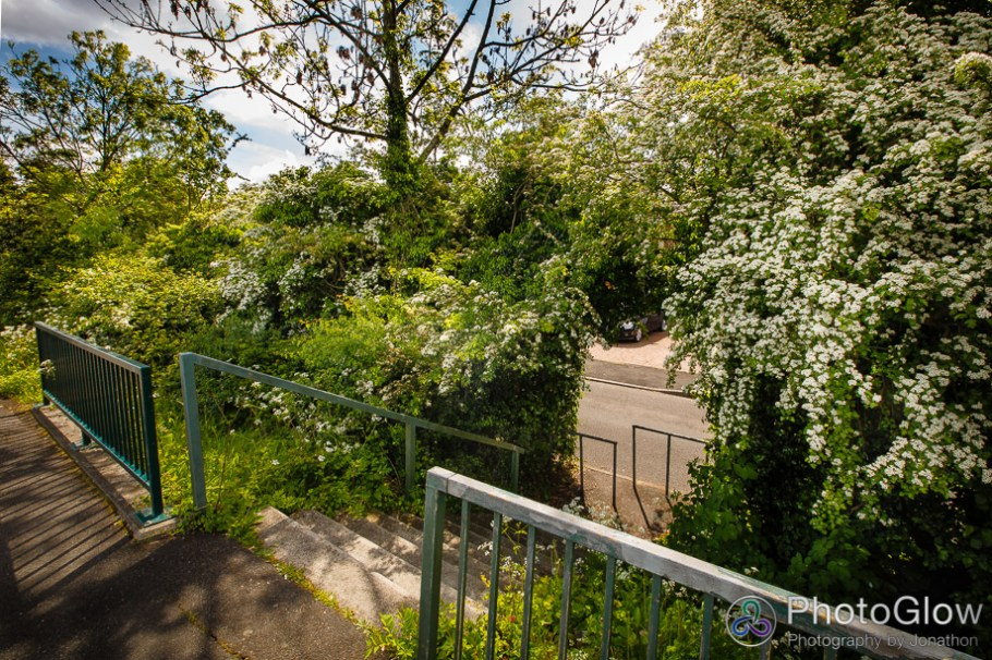 Steps down to Miserden Road through hedge from A40 bus stop