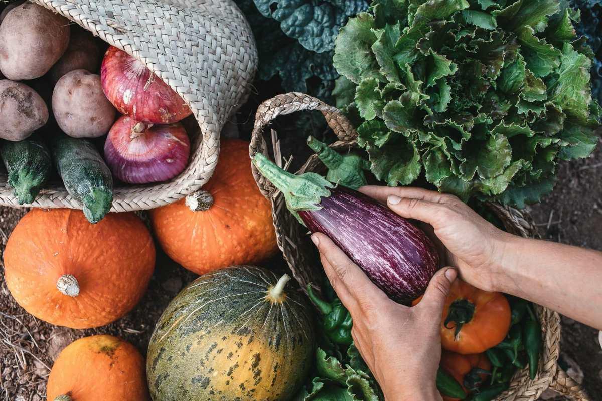 Detalle fotográfico de unas manos sosteniendo una verenjena junto a algunas verduras en el suelo recién recolectadas
