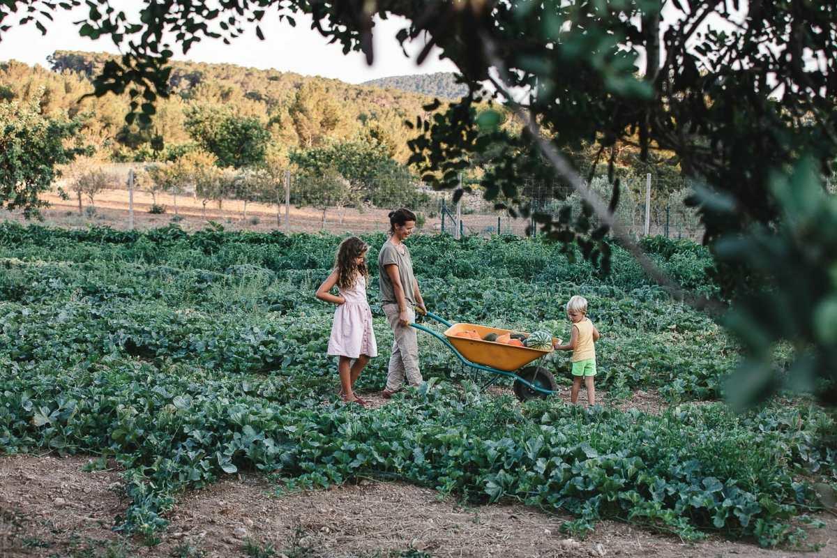 Fotografía de una payesa con su carretilla con verduras y dos niños durante la cosecha en Can Puvil
