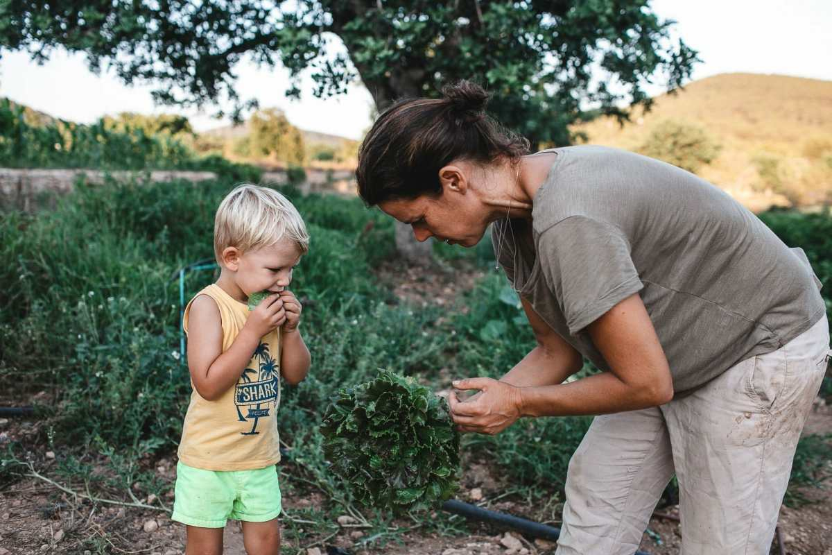 Momento familiar de niño comiendo lechuga fresca recién recolectada por su madre de la huerta Can Puvil de Ibiza