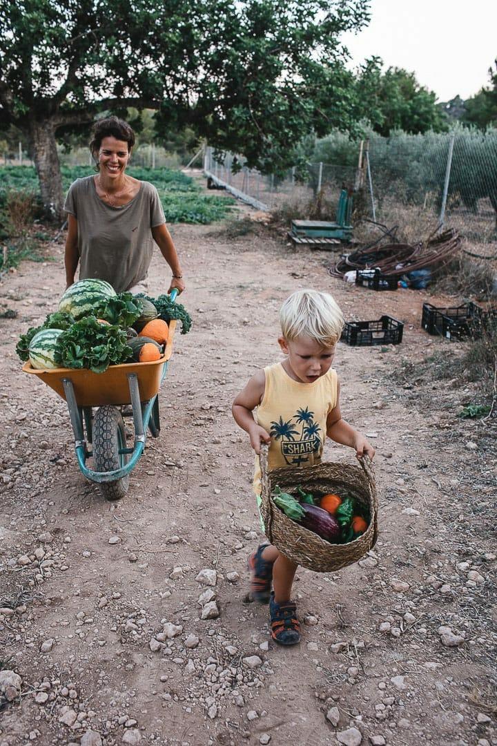 momento entrañable de madre e hijo trasladando la verdura recogida del huerto Can puvil