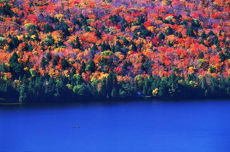 Maple leaf Algonquin Canada