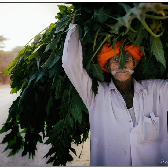 red turbaned farmer in rajasthan