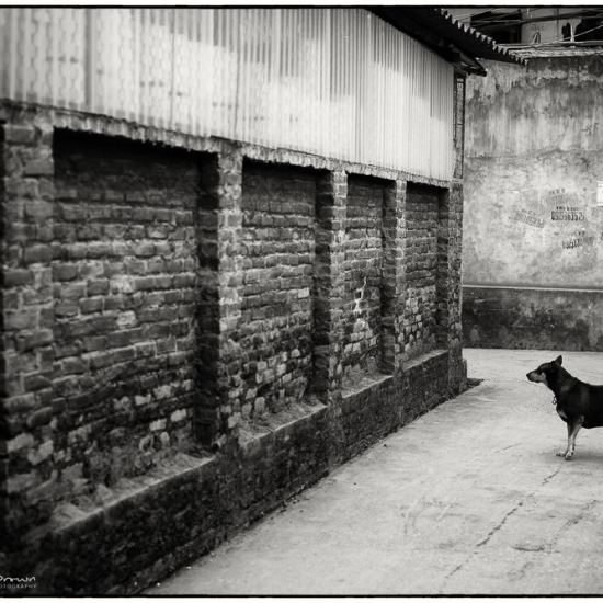 a dog watches a wall in vietnam