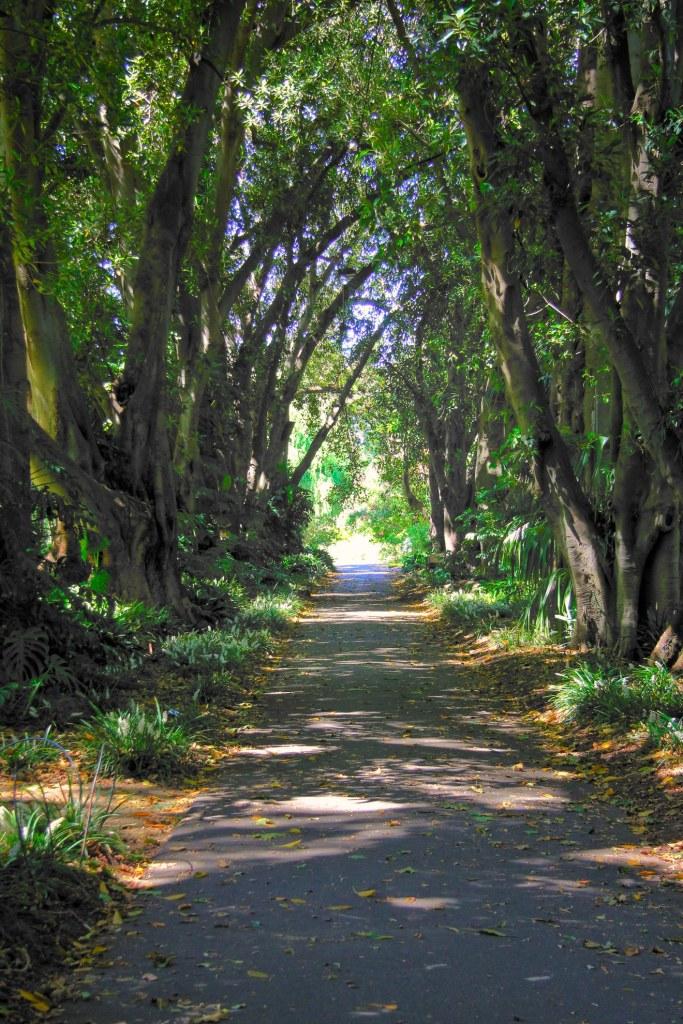 Botanic Garden Row of Trees