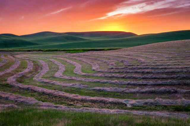 8. Palouse-088-Edit