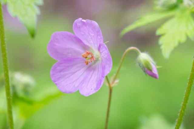 wildflower, purple, 7 bridges, trail, hike, milwaukee