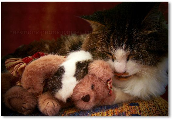 18 Cute Pictures of Cats and Dogs with Their Stuffed Toys