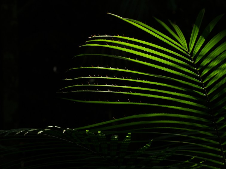 Sun shines through the fern in Queensland, Australia