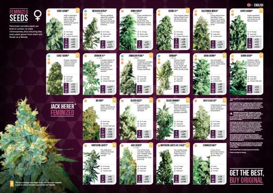 Sensi Seeds | Design, Photoshop, DTP