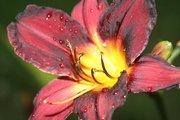 Raindrops by Diana Birdwell