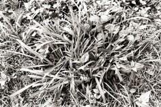Coarse Grass
