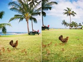 hawaii-2up-k1