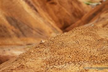 christophe-mastelli-photographe-174.jpg