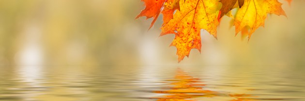 Shooting Fall Colors – the Basics