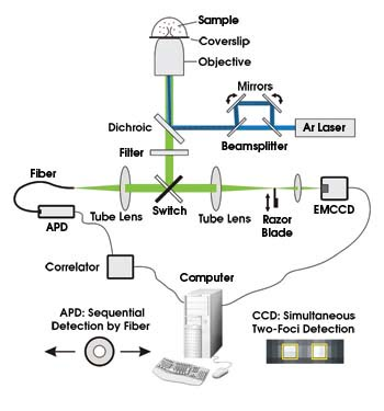 Making Fluorescence Correlation Spectroscopy Flexible