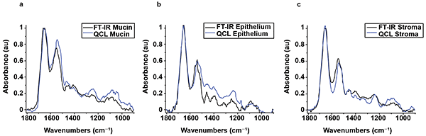 FTIR and Spero microscope spectra from a single pixel of mucin, from the tissue shown in Figure 5.