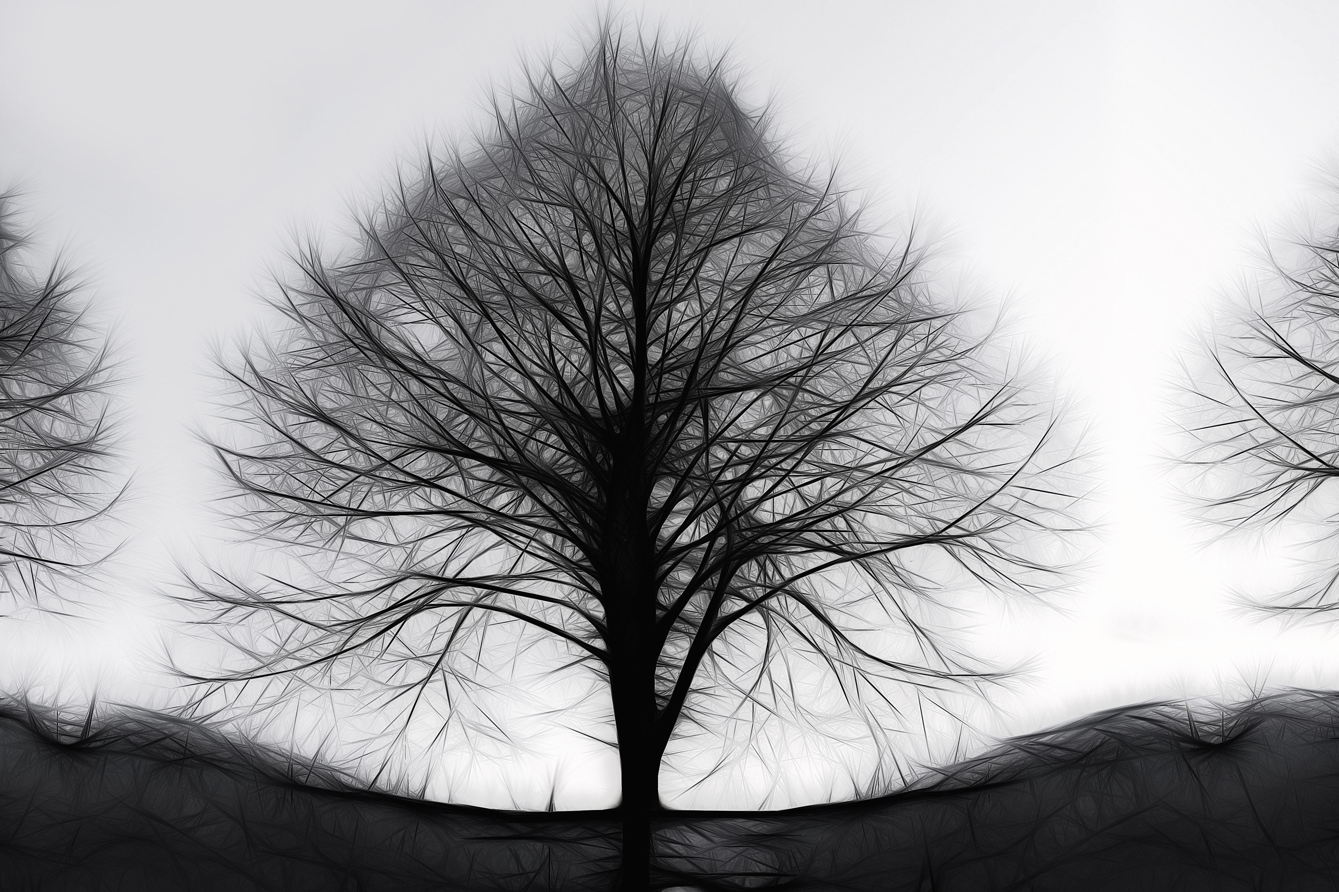 Abstract fractal tree  Photopublicdomaincom