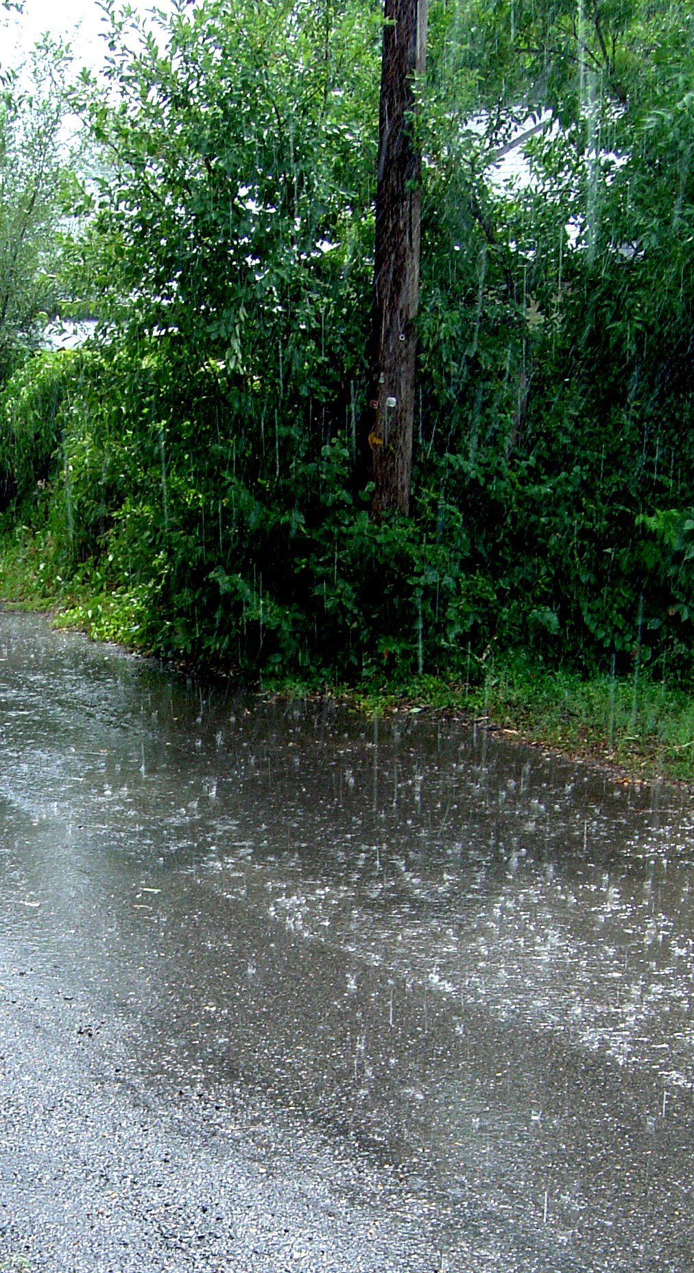 Telephone Pole in Rain Shower Picture  Free Photograph