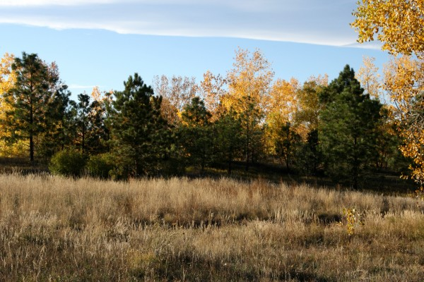 Fall Wooden Wallpaper Autumn Meadow Picture Free Photograph Photos Public Domain
