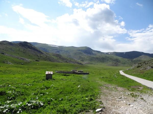 Schaapskooien in het Bistra Gebergte (Macedonië)