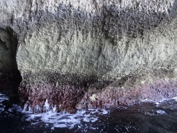 Korale w Jaskiniach Dwejra (Gozo, Malta)