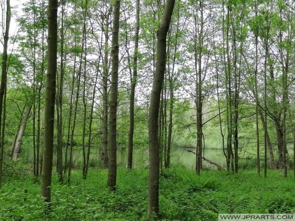 Belle nature de Het Merkske (Belgique - Pays-Bas)