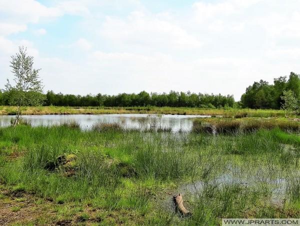 Sumpfiges Gebiet in Het Merkske (Belgier - Niederländischen Grenze)