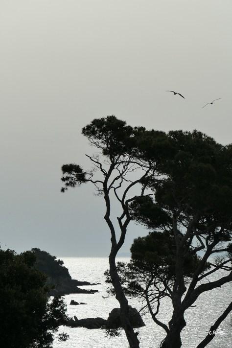 Goélands en vol au-dessus de la mer, Presqu'île de Giens, juin 2019