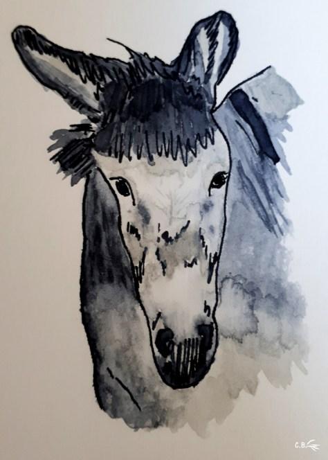 Encre de chine et aquarelle, âne