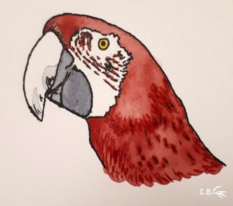 Encre de chine et aquarelle, ara rouge
