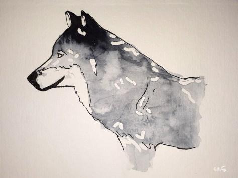 Encre de chine et aquarelle, loup