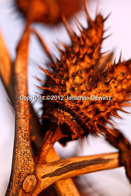 Whimsical seed pod in a garden. (©2012 Jonathan Gewirtz)