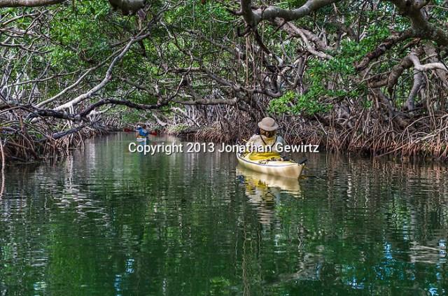 Kayakers paddling in a mangrove tunnel near Key Largo, Florida. (Jonathan.Gewirtz@gmail.com)