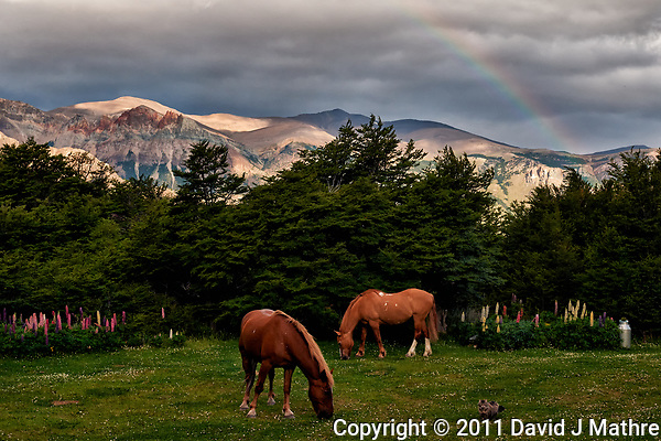 A Cat with Two Horses Grazing under a Rainbow in the Backyard of Hosteria El Pilar in El Chalten, Argentina - Patagonia. Image taken with a Nikon D3x and 50 mm f/1.4G lens (ISO 800, 50 mm, f/6.3, 1/500 sec). (David J Mathre)