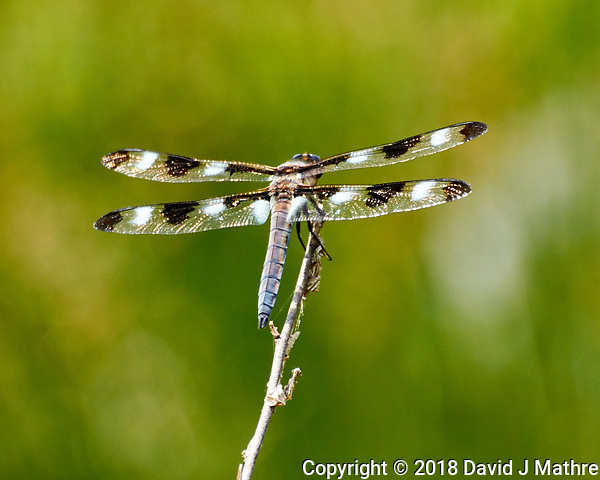 Dragonfly on a Twig. Image taken with a Nikon 1 V3 camera and 70-300 mm VR lens (David J Mathre)