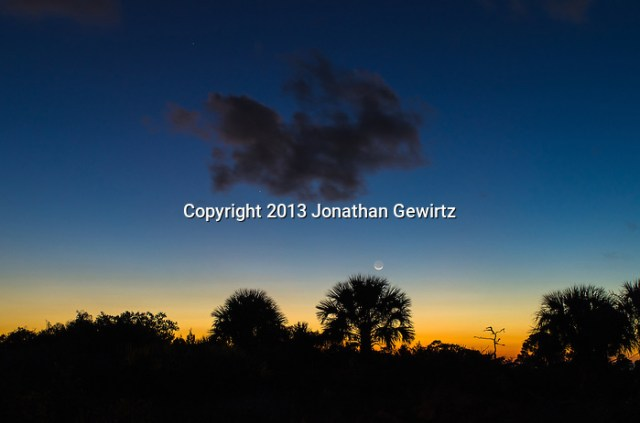 The moon rises over palm scrubland shortly after sunset at Jonathan Dickinson State Park, Hobe Sound (Jupiter), Florida. (Jonathan.Gewirtz@gmail.com)