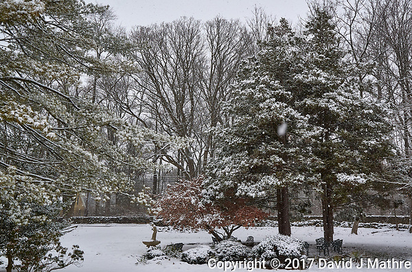 First Snow. Autumn Backyard Nature in New Jersey. Image taken with a Leica T camera and 11-23 mm lens (ISO 400, 23 mm, f/5.6, 1/400 sec) (David J Mathre)