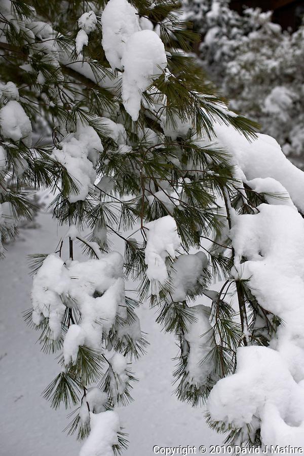 Snow in New Jersey. Nikon D3x and 50 mm f/1.4 (ISO 100 f/4, 1/400 sec) (David J Mathre)