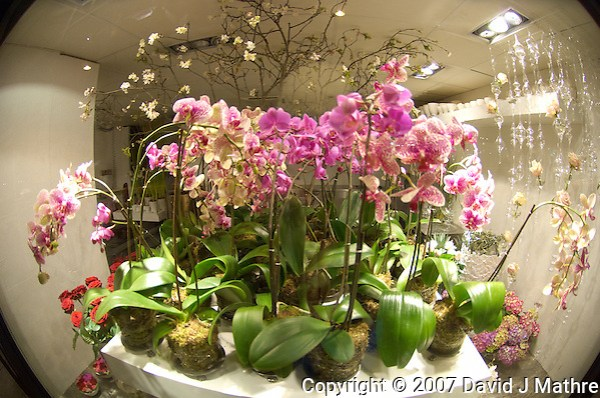 Orchids, Winter in Oslo Norway (David J Mathre)