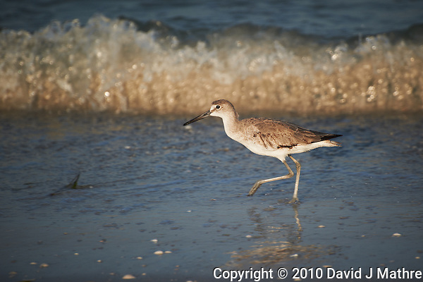 Sandpiper on the Beach at Fort Desoto Park in St. Petersburg, Florida. Image taken with a Nikon D3s and 70-300 mm VR lens (ISO 200, 300 mm, f/5.6, 1/640 sec). (David J Mathre)