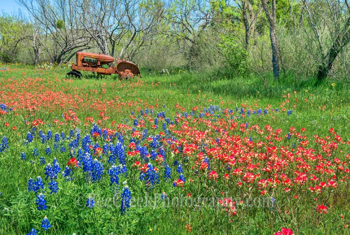 We love these colorful wildflowers of bluebonnets, and indian paintbrush in this field with an old rusty tractor in the Texas Hill Country. (Tod Grubbs & Cynthia Hestand)