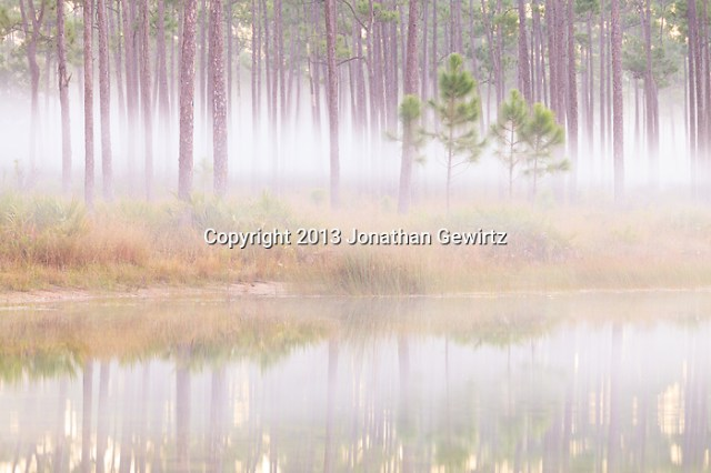 Sunrise fog and reflections at the Long Pine Key pond in Everglades National Park, Florida. (Jonathan Gewirtz   jonathan@gewirtz.net)