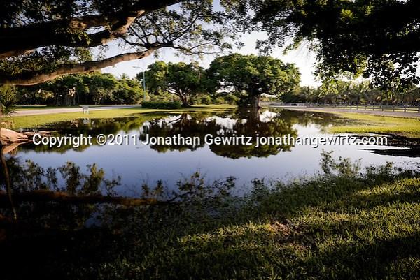 A view of banyan fig trees reflected in pools of rain water at Crandon Park, Key Biscayne, Florida. (Jonathan Gewirtz)